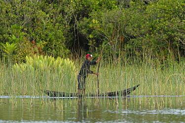 Man punting dugout canoe through wetland. Pangalanes Canal, Palmarium Reserve, Lake Ampitabe, Madagascar. 2019.