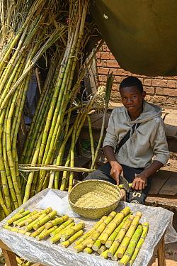 Young man selling sugar cane on market stall. Mandroseza, Antananarivo, Madagascar. 2019.