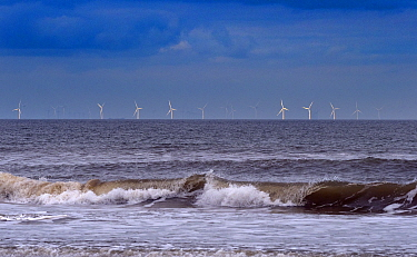 RF - Lynn and Inner Dowsing Wind Farm, The Wash from Titchwell, Norfolk, UK. October 2018. (This image may be licensed either as rights managed or royalty free.)