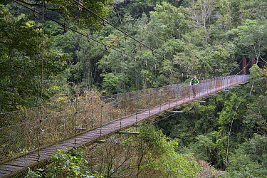 Photographer Fabian Muhlberger on a suspension bridge on the Walami trail, in temperate forest, Yushan National Park, Taiwan, March 2019.