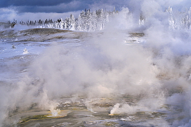 Porcelain Basin in winter. Norris Geyser Basin in Yellowstone National Park. Wyoming, USA. January.