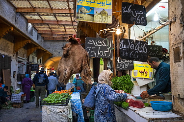 Camel head hangs in front of a store that sells camel meat in Fez (or Fes), Morocco.