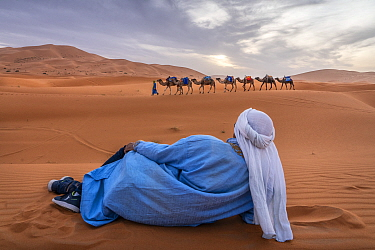 Berber man sits on the sand and watches as a camel caravan crosses the sane dunes of Erg Chebbi. Morocco.