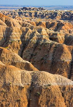 Eroded badlands near the Pinnacles area, Badlands National Park, South Dakota, USA. August.