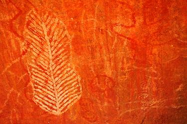 Aboriginal rock art engravings on sandstone depicting leaf and bird. Uluru / Ayers Rock, Uluru-Kata Tjuta National Park, Northern Territory.