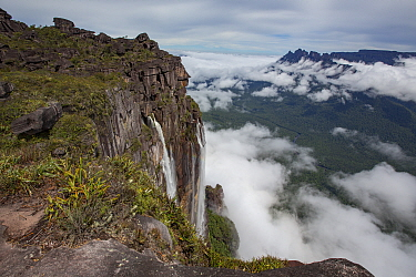 Angel Falls, the world's highest uninterrupted waterfall with a fall of 807m, cloud covered rainforest below. Taken from Auyan-tepui, a flat topped mountain. Canaima National Park, Venezuela. 2018...