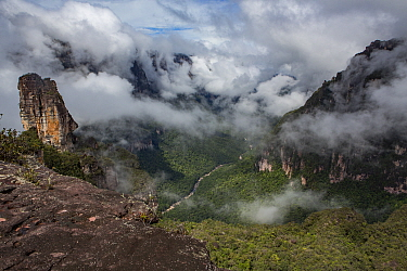 Rainforest with low cloud, view from top of a tepui, a flat-topped sandstone mountain. Canaima National Park, Venezuela. 2018