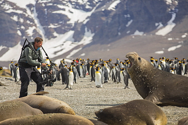 Cameraman Mark MacEwen filming Southern elephant seal (Mirounga leonina) with ready rig, King penguin (Aptenodytes patagonicus) colony and mountains in background. Taken on location for BBC Seven Worl...