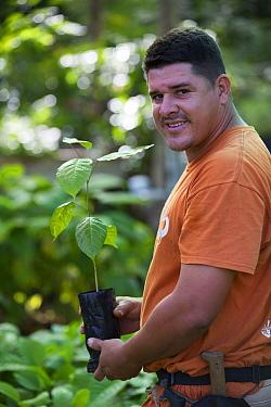 Man holding sapling from tree nursery, portrait. Trees used for tropical rainforest regeneration. Golfito, Costa Rica. 2018.