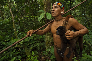 Huaorani Indian, Tage Kaiga, hunting in Amazon rainforest, dead Woolly monkey (Lagothrix sp) slung over shoulder, shot using blowgun. Members of this Indian tribe were uncontacted until 1956. Yasuni N...