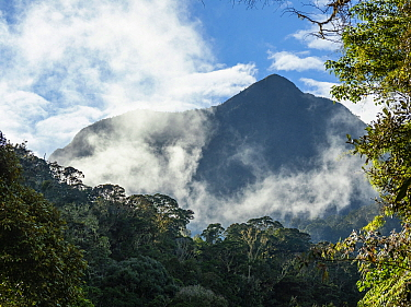 Mount Michael in montane rainforest. Eastern Highlands, Papua New Guinea. 2019.