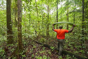 Man walking through Amazon rainforest carrying leaf as a shield. Near Oyapock River, French Guiana.