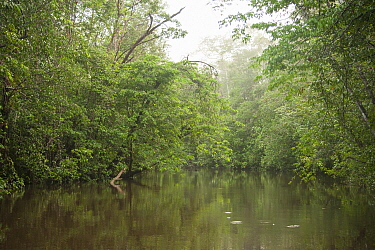 Kourou River flowing through forest, Crique Cariacou, French Guiana. 2015.