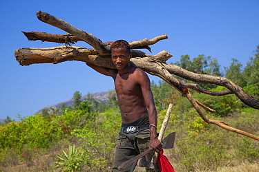 Man carrying firewood. Near Toliara, Madagascar. 2012.
