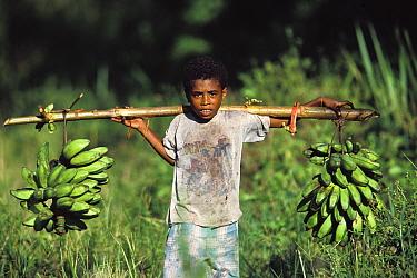 Boy carrying bunches of bananas. Salawati Island, West Papua, New Guinea, Indonesia.