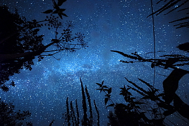 Plants and trees at night with the Milky Way and stars in the sky. Bieszczady Mountains, Poland. September.