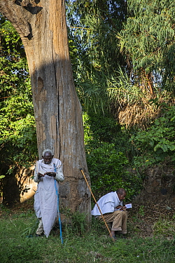 Men in church forest attending Sunday service at Debre Sina Orthodox Church. Church forests remain largely intact within a degraded landscape as they are considered sacred. Near Gorgora, Ethiopia. 201...