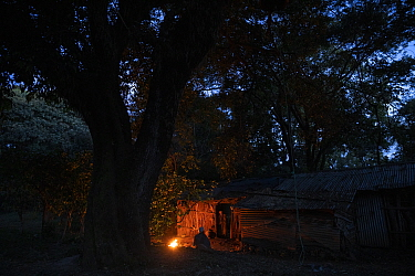 Monks attending fire at night in church forest of Wonchet Michail Orthodox Church. Near Hamusit, Ethiopia. 2018.