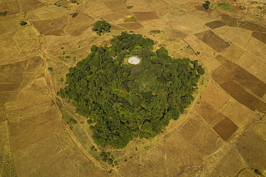 Aerial view of habitat fragmentation with degraded land surrounding church forest of Abe Libanose Orthodox Church. Forest cover in Ethiopia has fallen from 40% to 4.2% in 50 years. Church forests rema...