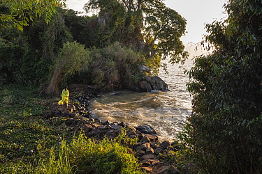 Priest walking along shore of Lake Tana, with church forest in background. Church forests are forest fragments surrounding orthodox churches, remaining intact in a largely deforested landscape as they...