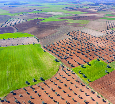 Aerial view of olive groves and cereal fields, Toledo, Castilla-La Mancha, Spain. February 2020.