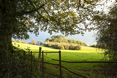 View over makeshift fence to pasture and distant copse bathed in evening sunlight, Mendip Hills, near Bristol,UK, November 2020.
