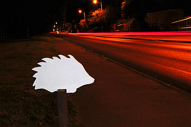 Ghost hedgehog sign, next to busy road at night. Placed to raise awareness of hedgehog road deaths, and to encourage careful driving. Dorset, England, UK. September.