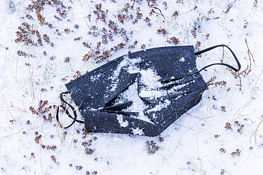 Discarded face mask in the snow, close to the parking lot near the eruption site of the Fagradalsfjall volcano, Iceland. April 4th 2021. The volcano has drawn an estimated number of 30.000 visitors s...