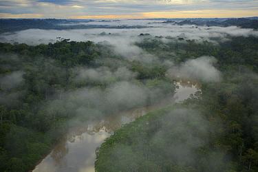 Aerial view of morning mist above the Tiputini River in Yasuni National Park, Francisco de Orellana Province, Ecuador, July.