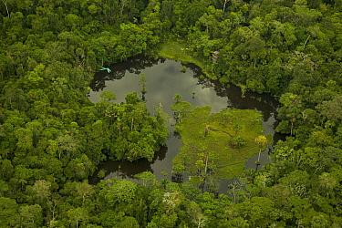Blackwater lake west of Yasuni National Park, Francisco de Orellana Province, Ecuador, July.