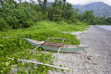Small dugout canoe with outriggers on beach with beach Morning glory flowers (Convolvulaceae) Bantanta Island, Papua, Indonesia