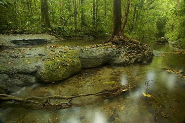 Stream in Badigaki rainforest, with cascades over limestone shelves. Aru Islands, Indonesia.