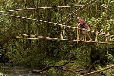Huli elder constructing a traditional vine and pole suspension bridge over a stream, Papua New Guinea, November 2010.