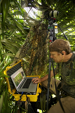 Photographer Tim Laman with laptop shooting in live view mode from his canopy blind, controlling a camera in a different tree with a wide angle view of the Greater Bird of Paradise display site, New G...