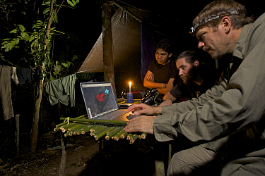 Photographer Tim Laman checking digital pictures on his laptop at his rain forest camp site in the mountains of Batanta Island, whilst Ornithologist Edwin Scholes and Samkris Tindige look on, Papua N...