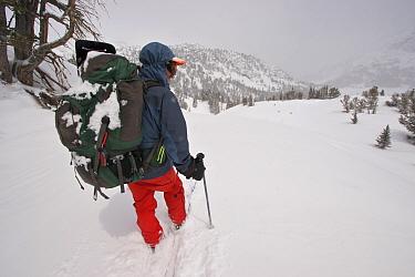 Skier Phil Atkinson skiing through deep powder with a full pack above Denny Lake, Beartooth Mountains, Montana, USA. May 2008