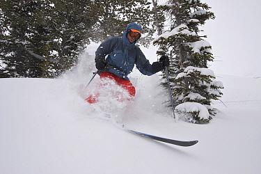 Skier Phil Atkinson skiing through deep powder snow above Denny Lake, Beartooth Mountains, Montana, USA May 2008