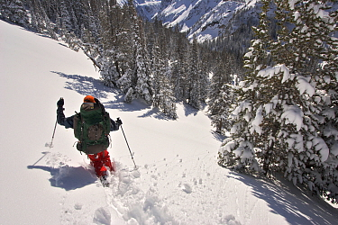 Skier Phil Atkinson skies through deep powder near Twin Outlets Lake after snow storm, Beartooth Mountains, Montana, USA. May 2008