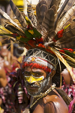 Villager with traditional feathered headdress in Goroka, Eastern Highlands Province, Papua New Guinea. September 2004