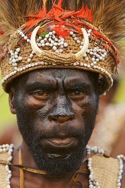 Man in traditional feathered headdress from Huon Peninsula area, Morobe Province. Goroka, Eastern Highlands Province, Papua New Guinea. September 2004