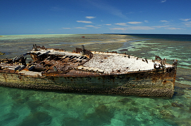 Wreck of the HMCS Protector (Australia's first naval vessel) on the reef at Heron Island, Great Barrier Reef, Queensland, Australia