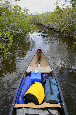 Russell Laman paddles his kayak through the mangrove channels of the Hell's Bay Canoe Trail, Everglades National Park, Florida, USA. Model released, April 2008