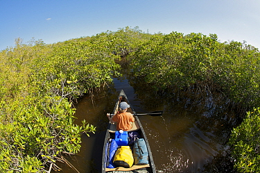 Russell Laman paddling a canoe through mangrove channels of the Hell's Bay Canoe Trail, Everglades National Park, Florida, USA. Model released, April 2008