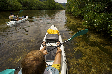 Photographer Tim Laman (foreground) and field assistant Zafer Kizilkaya explore and photograph the mangroves by kayak. Kostrae Island, Federated States of Micronesia. July 2005, model released