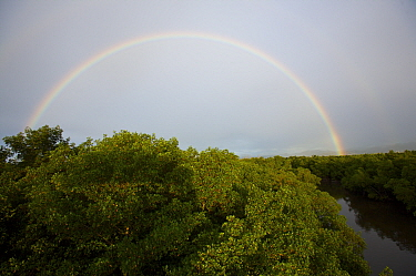 Full rainbow arch over Red mangrove forest {Rhizophora mangle} and river channel in Caroni Swamp. Caroni Bird Sanctuary, Trinidad, Trinidad and Tobago. February 2006