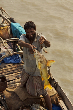 A fisherman displays his catch of a large catfish. Sundarbans, Khulna Province, Bangladesh, March 2006