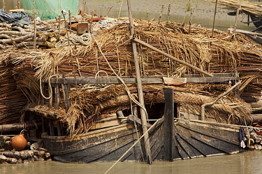 A boat carrying Nipa palm leaves harvested from the mangroves and used for roof thatch, Sibsa river, Sundarbans, Khulna Province, Bangladesh, March 2006