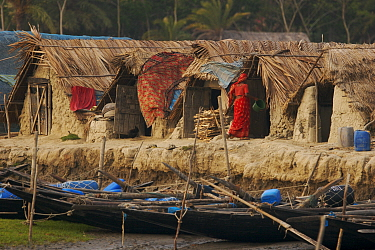 Traditional houses in the village of Chandpai on the Passur River, where shrimp fry fishing to supply shrimp for the shrimp ponds is the main industry. Villagers live in simple mud and thatch huts tha...