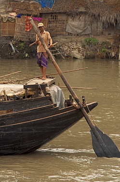 Man operating the oars to power a cargo boat on the Rupsha River, Sundarbans, Khulna, Bangladesh, April 2006
