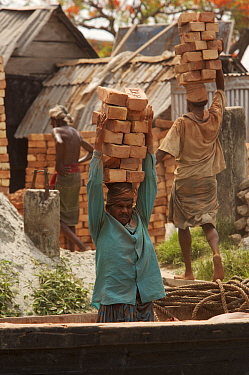 Men unloading bricks from a boat by carrying them on their head. Sundarbans, Khulna, Bangladesh, April 2006